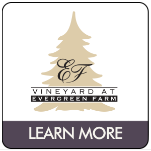 Vineyard at Evergreen Farm
